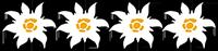 Logo Auszeichnung 4 Edelweiss